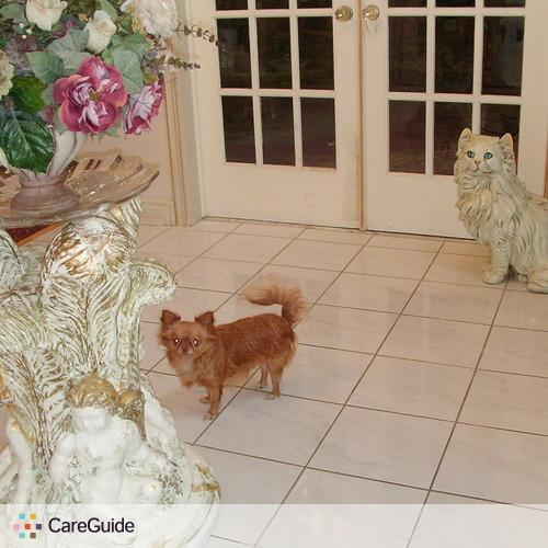 Pet Care Provider Katherine A's Profile Picture