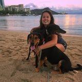 Full time dog walker/sitter