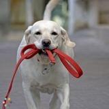 Dog Walker in Richmond Hill