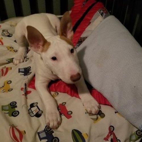 Pet Care Provider Kendra G's Profile Picture