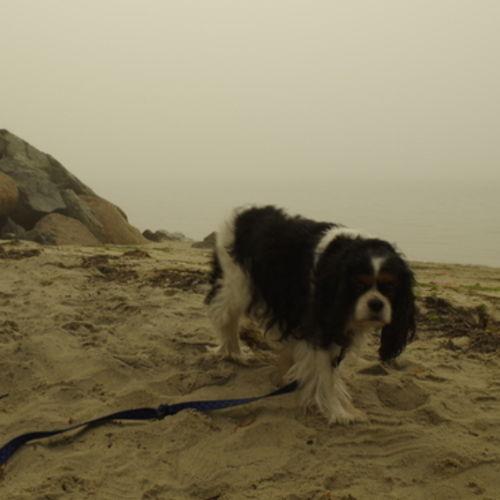 Pet Care Provider Kat Shea's Profile Picture