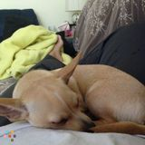 Dog Walker, Pet Sitter in Lake Buena Vista