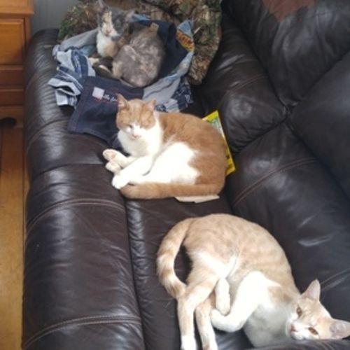 Pet Care Provider Andi Whitehead Gallery Image 3
