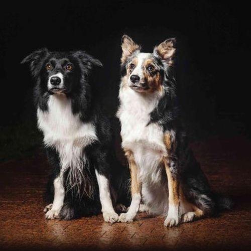 Pet Care Job Fur, Fins & Feathers, LLC F's Profile Picture