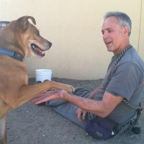 Pet Care Provider Thomas S's Profile Picture