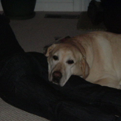 Pet Care Provider  Gallery Image 2