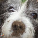 Dog Walker, Pet Sitter in Saint Simons Island