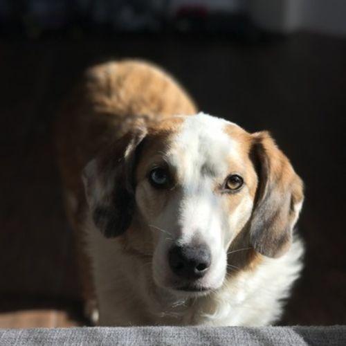 Pet Care Job Lucia Mazzone Gallery Image 3
