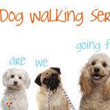 Dog Walker, Pet Sitter in Las Vegas