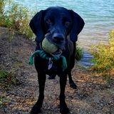 Rochester Pet Care Provider Seeking Work