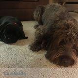 Dog Walker Job, Pet Sitter Job in Menasha