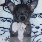 Dog Walker, Pet Sitter in North Canton