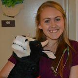 Seeking Blacksburg Pet Care Provider Opportunity