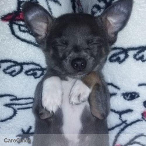 Pet Care Provider Julia Ritchey's Profile Picture