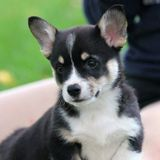 Dog Sitter in Aurora and Newmarket, Ontario