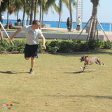 Dog Walker, Pet Sitter, Kennel in Miami Beach