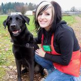 Certified Dog Trainer avail for Walks, Training, and Pet Sitting