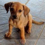 Dog Walker, Pet Sitter in Mooresville