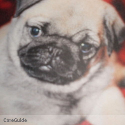 Pet Care Provider Claudia Sabo's Profile Picture