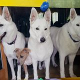 Great Dog Walker for Hire, sitter, feed, cats, parrots, all types animals