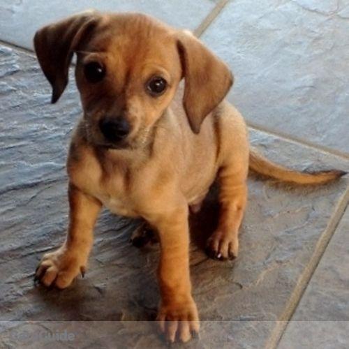 Pet Care Provider Kim Tilles's Profile Picture