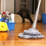 Housekeeper in Edmonton