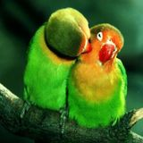 Available: All types of parrots sitter in Edmonton