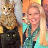 Laguna Niguel - Housecleaner and Pet Cleanup - Must Love Cats : )