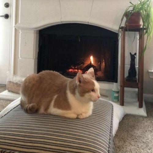 Pet Care Job Grace F's Profile Picture