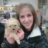 Part-Time Pet Sitter , Elmira, NY