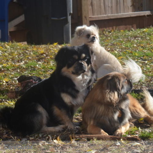 Pet Care Provider Vicky S's Profile Picture