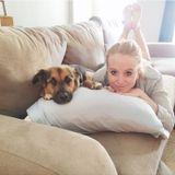 Dog Walker Job, Pet Sitter Job in Washington