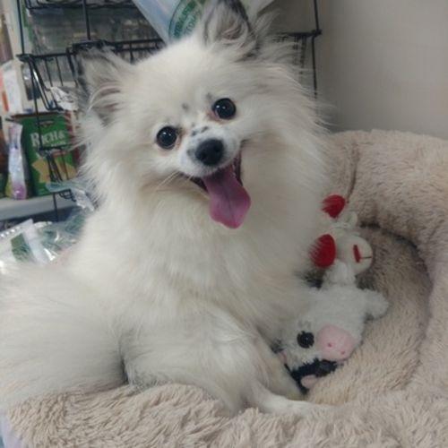 Pet Care Provider Kari P's Profile Picture
