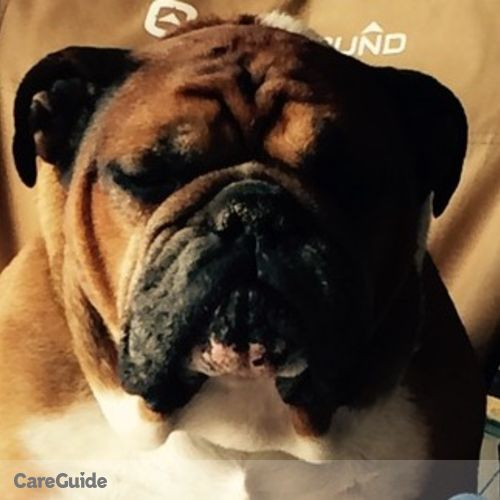Housekeeper Provider Bulldog Cleaning Services Ltd's Profile Picture