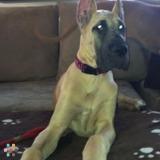 Dog Walker, Pet Sitter in Hackettstown