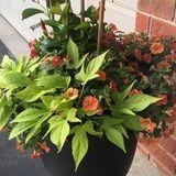 Gardener in Cambridge