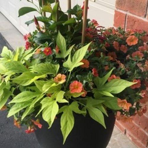 Gardener Provider Janice C's Profile Picture