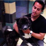 Experienced dog walker/sitter with animal behavior training