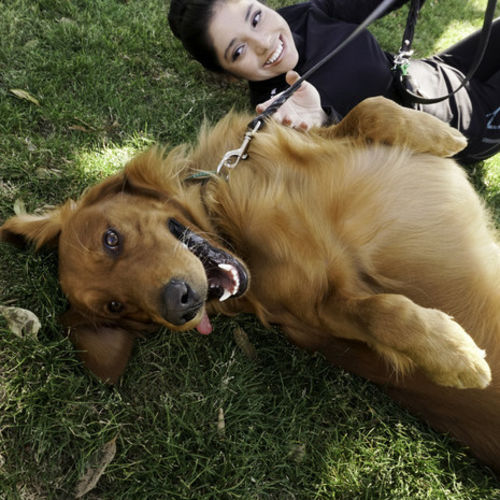Pet Care Provider Elizabeth A Gallery Image 3