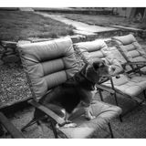 Seeking Elkins Park dog sitting/walking job