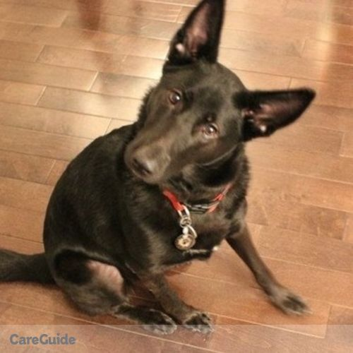 Pet Care Provider Nicole Adams's Profile Picture