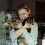 Dog Walker, Pet Sitter, Kennel in Brooklyn