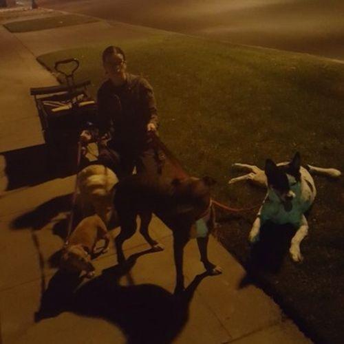 Pet Care Provider Amy D's Profile Picture