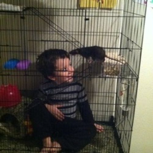 Pet Care Provider Julie H Gallery Image 3