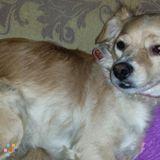 Dog Walker, Pet Sitter in Riverside