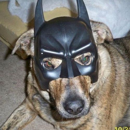 Pet Care Provider Samantha C Gallery Image 1