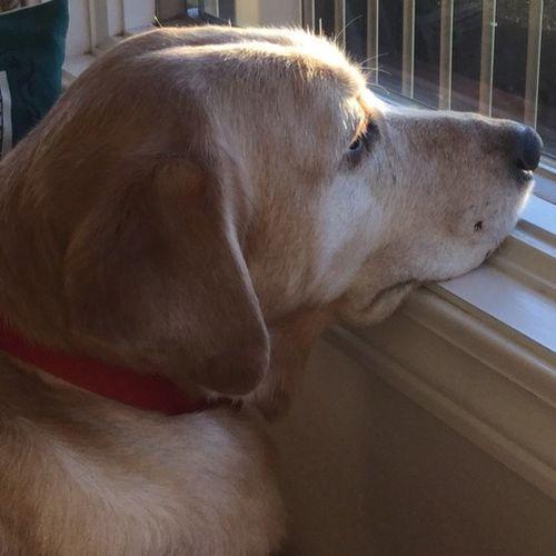 Pet Care Provider Sandy T's Profile Picture