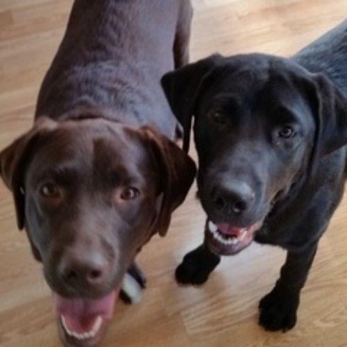 Pet Care Provider Tammy Higgins's Profile Picture