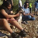 Seeking Hard Working St. Catharines Dog Sitter Opportunity