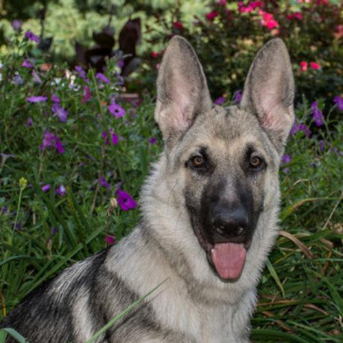 Pet Care Provider Colette F's Profile Picture